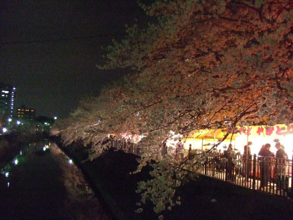 夜桜(20110410) 007