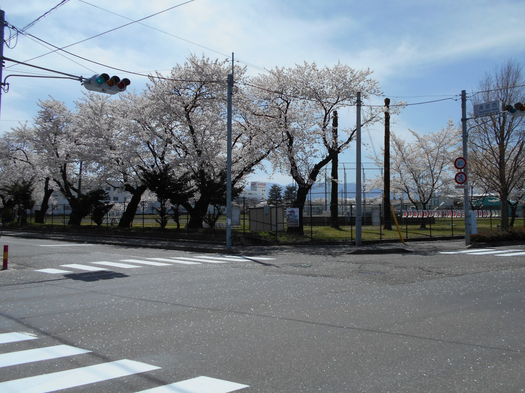 ソメイヨシノ松本駐屯地